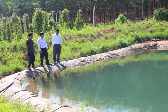 """Nông dân Đắk Lắk chống hạn cho cây trồng bằng mô hình tiết kiệm nước """"3 trong 1"""" - Ảnh 2."""