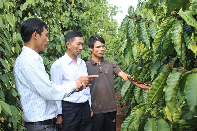 """Nông dân Đắk Lắk chống hạn cho cây trồng bằng mô hình tiết kiệm nước """"3 trong 1"""" - Ảnh 4."""