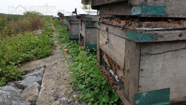 Ninh Bình: U 80 đưa quân đi tìm vị ngọt của biển, kiếm tiền triệu mỗi ngày - Ảnh 2.
