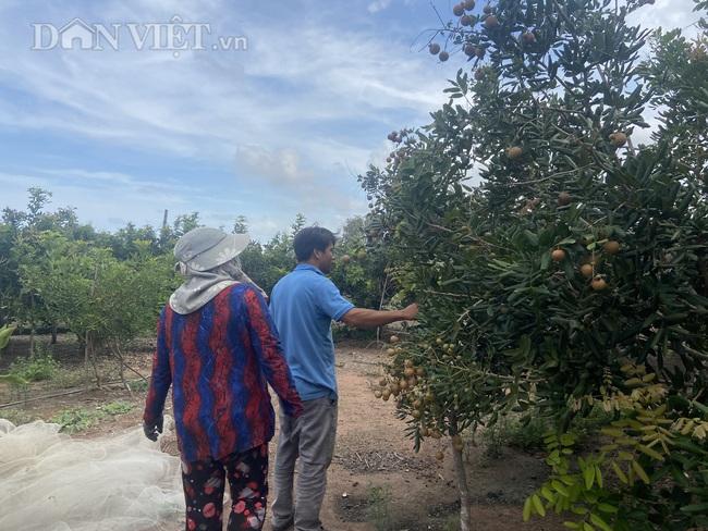 Nông dân khổ sở vì đầu hè trái cây rớt giá - Ảnh 2.