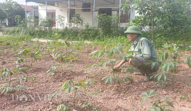 """Huyện làm dự án """"chui"""", xã hứa """"hão"""" khiến nông dân mất đất - Ảnh 1."""