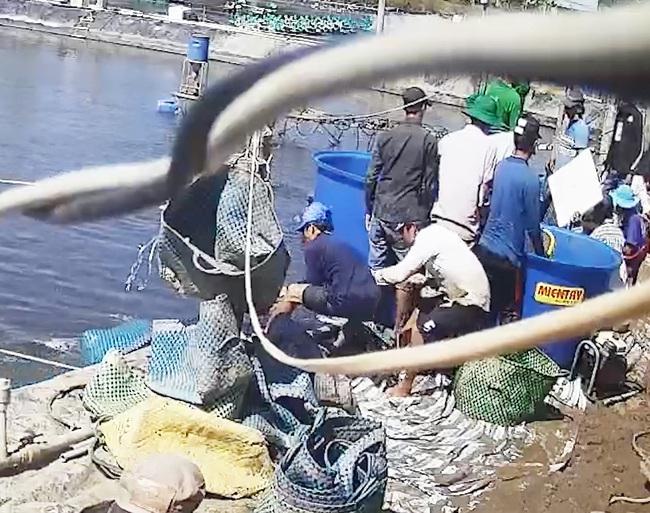 Vụ thương lái trộm tôm ở Cà Mau: Khởi tố bắt tạm giam 3 người - Ảnh 1.