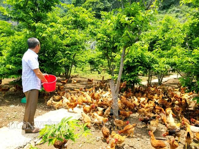 """Lão nông bị nghĩ """"khùng"""" vì nuôi ruồi lấy trứng chăn đàn gà nghìn con  - Ảnh 5."""