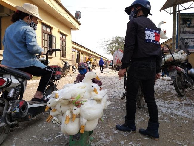 """Giá gia cầm hôm nay 30/5: Vịt thịt ở chợ đầu mối dễ bán, gà """"ì ạch"""" - Ảnh 1."""