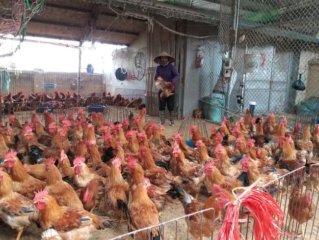 """Giá gia cầm hôm nay 30/5: Vịt thịt ở chợ đầu mối dễ bán, gà """"ì ạch"""" - Ảnh 2."""