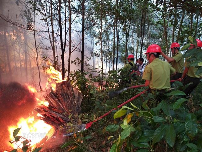 Cháy rừng cũng là một dạng thiên tai đặc thù - Ảnh 1.