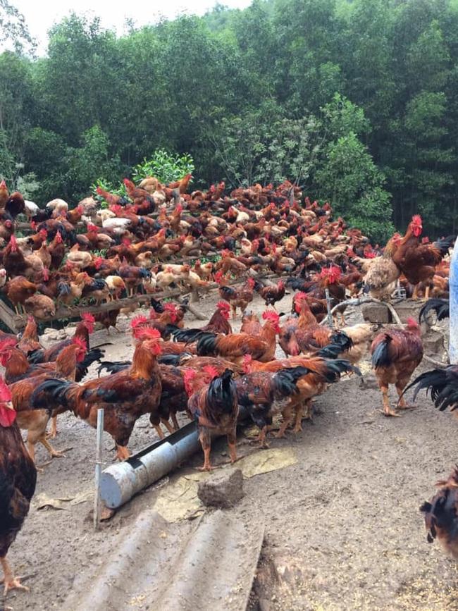 Giá gia cầm hôm nay 31/5: Vịt thịt sắp cán mốc mới, gà công nghiệp dễ bán - Ảnh 2.