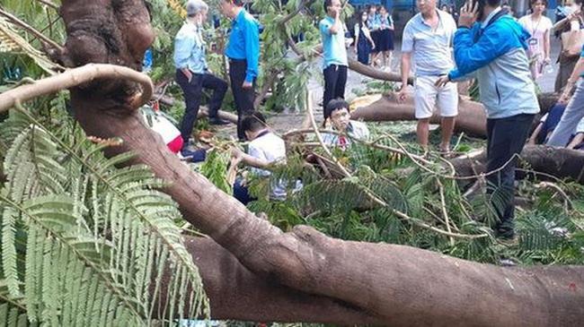 Thêm cây phượng bật gốc ở sân trường tiểu học ở tỉnh Đồng Nai - Ảnh 3.