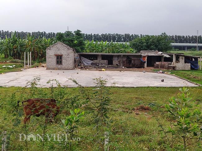Dân bị phạt vì trồng lúa trên đất bỏ không: Chính quyền đối thoại với các hộ dân - Ảnh 5.