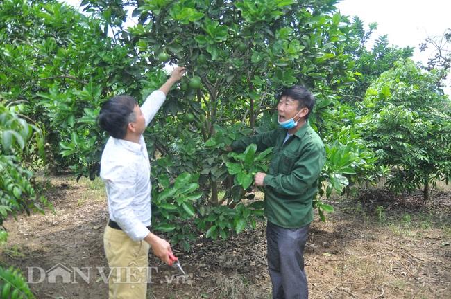 Yên Bái: Có nửa ha đất trồng các loại cây cho thu vài trăm triệu mỗi năm - Ảnh 1.