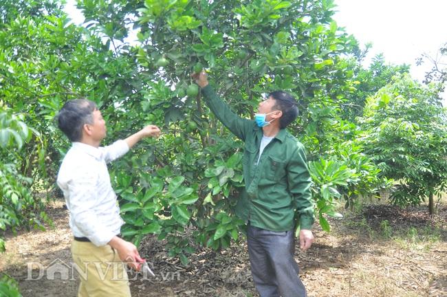 Yên Bái: Có nửa ha đất trồng các loại cây cho thu vài trăm triệu mỗi năm - Ảnh 2.