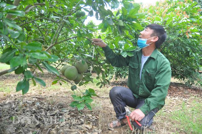 Yên Bái: Có nửa ha đất trồng các loại cây cho thu vài trăm triệu mỗi năm - Ảnh 5.