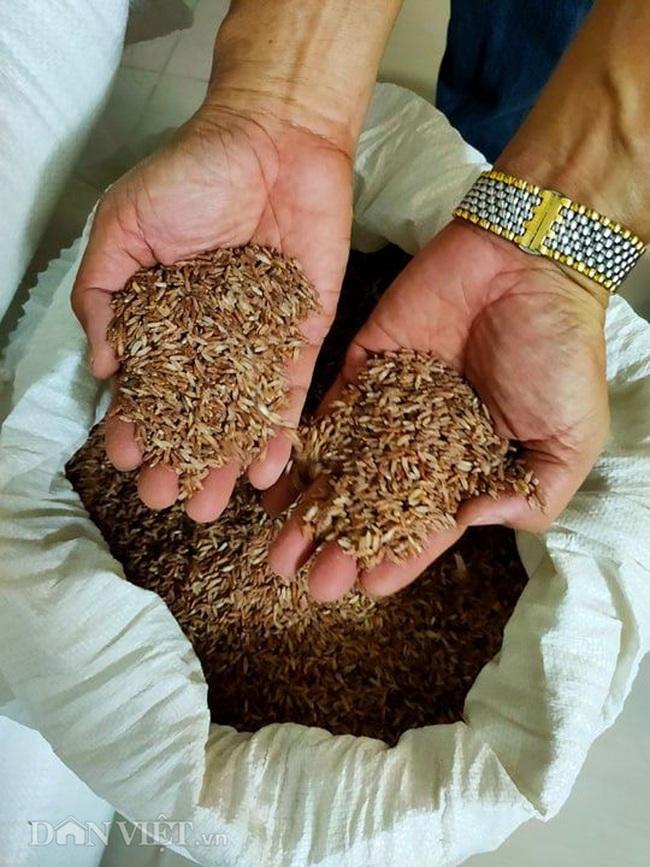 Mua 10 tấn gạo ủng hộ người nghèo, nhận hàng mới biết bị lừa - Ảnh 3.