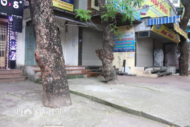 Hà Nội: Cây xanh ven đường đang bị 'bóp cổ' bằng xi măng, bê tông - Ảnh 2.