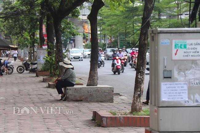 Hà Nội: Cây xanh ven đường đang bị 'bóp cổ' bằng xi măng, bê tông - Ảnh 1.