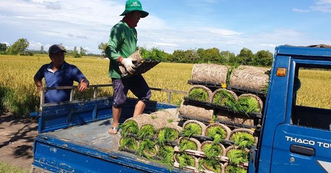 Ứng dụng cơ giới hóa, nhẹ công trồng lúa  - Ảnh 3.