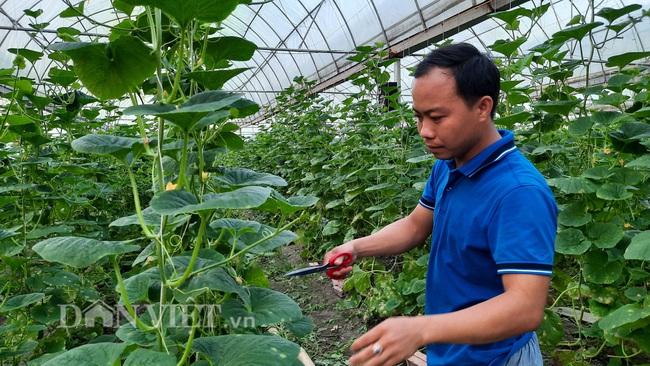 Yên Bái: Thạc sỹ trẻ làm nhà lưới trồng dưa Hàn Quốc đem lại hiệu quả kinh tế cao - Ảnh 4.