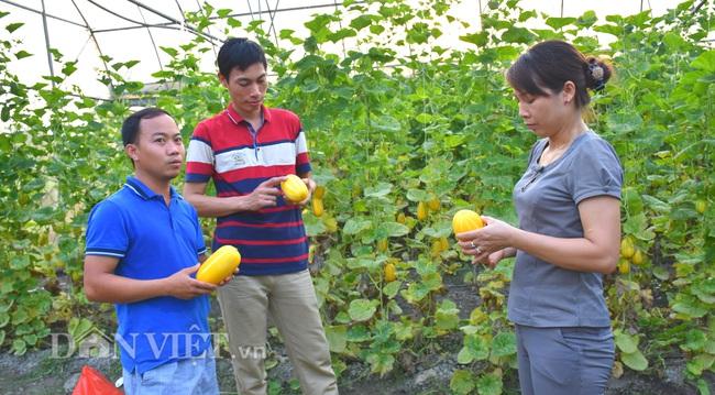 Yên Bái: Thạc sỹ trẻ làm nhà lưới trồng dưa Hàn Quốc đem lại hiệu quả kinh tế cao - Ảnh 1.
