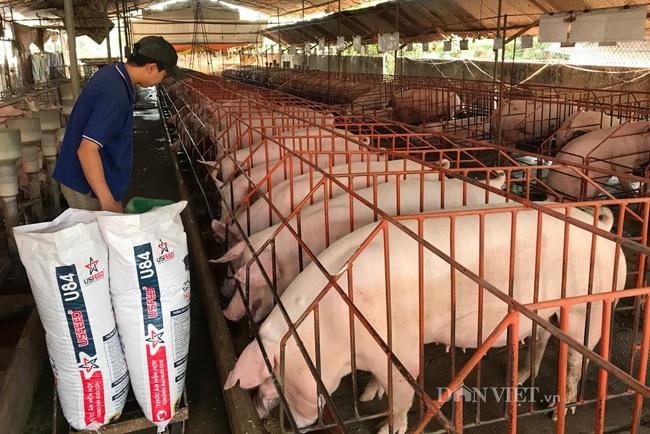 Giá heo hơi hôm nay 15/6: Ồ ạt đăng kí nhập khẩu gần 1 triệu con lợn, giá giảm mạnh - Ảnh 2.