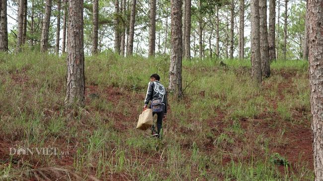 Ảnh - Clip: Săn nấm rừng Đà Lạt, không phải ai cũng biết - Ảnh 1.