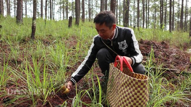 Ảnh - Clip: Săn nấm rừng Đà Lạt, không phải ai cũng biết - Ảnh 11.