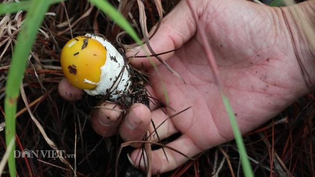 Ảnh - Clip: Săn nấm rừng Đà Lạt, không phải ai cũng biết - Ảnh 9.
