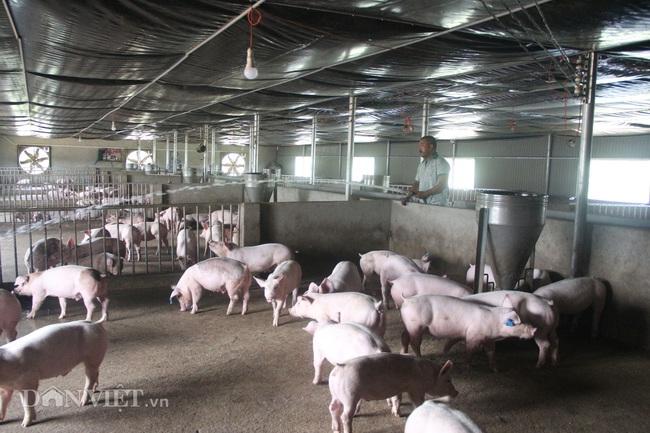 Anh Thành tiến hành phun nước, vệ sinh chuồng trại nuôi lợn.