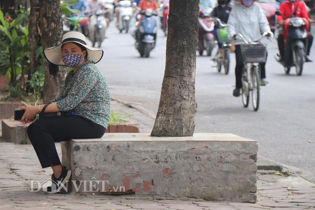 Hà Nội: Cây xanh ven đường đang bị 'bóp cổ' bằng xi măng, bê tông - Ảnh 3.