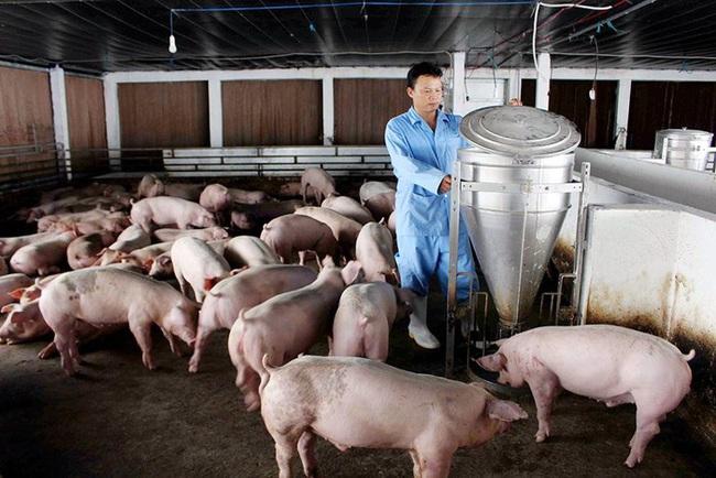 """Giá heo hơi hôm nay 20/6: Nuôi lợn """"3 sạch"""", tháng nào cũng bán 9-10 tấn, thu lãi nửa tỷ đồng - Ảnh 1."""