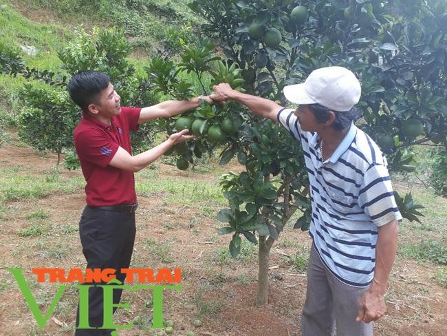 Thành phố Lai Châu phát triển cây ăn quả - Ảnh 1.
