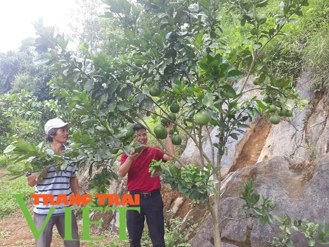 Thành phố Lai Châu phát triển cây ăn quả - Ảnh 4.
