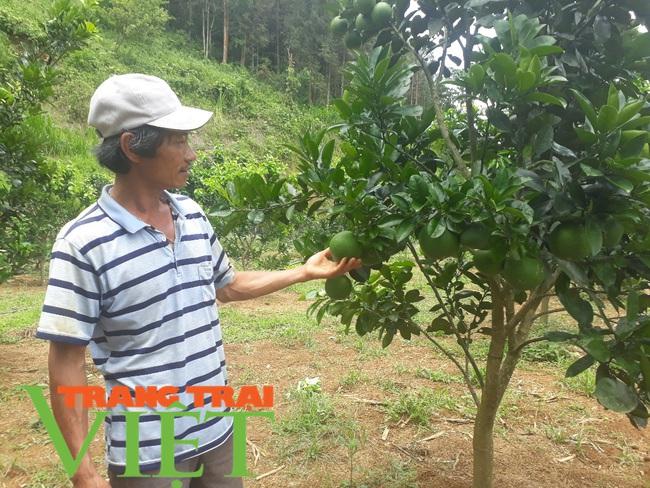 Thành phố Lai Châu phát triển cây ăn quả - Ảnh 3.