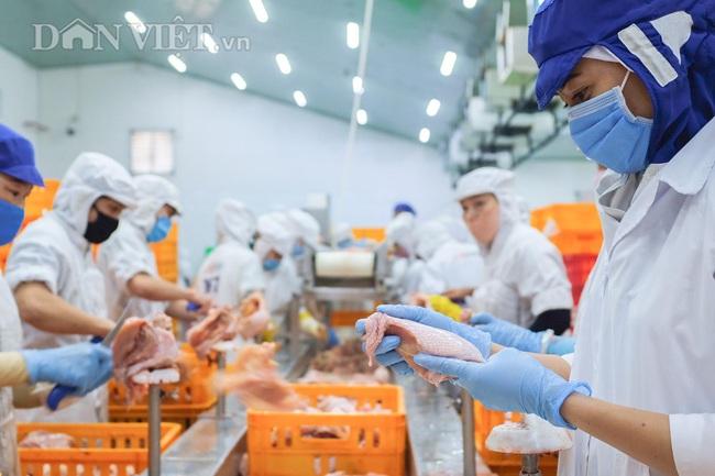 Công nghệ 4.0 giúp gà San Hà sạch cỡ nào? - Ảnh 6.