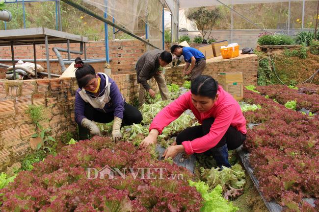 Giá rau Đà Lạt tăng kỉ lục, nhà vườn phấn khởi, không có hàng bán - Ảnh 4.