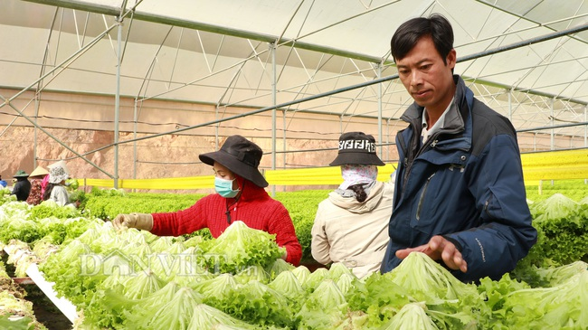 Giá rau Đà Lạt tăng kỉ lục, nhà vườn phấn khởi, không có hàng bán - Ảnh 2.
