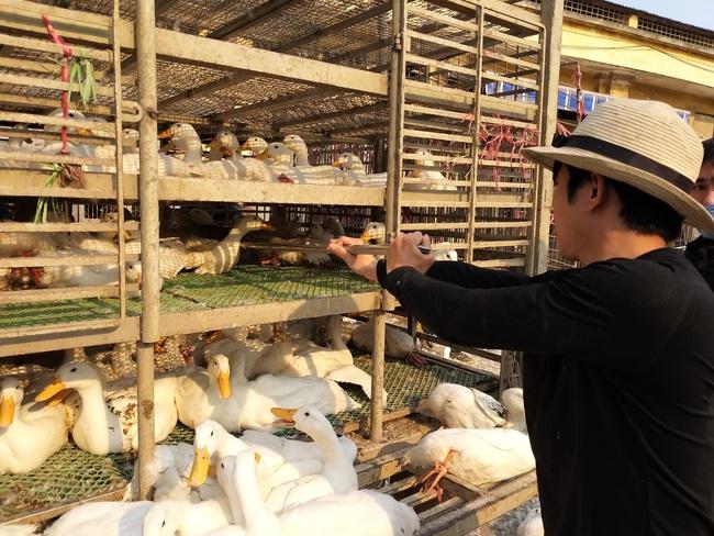 Giá gia cầm hôm nay 29/6: Giá gà thịt công nghiệp giảm, vịt về chợ ít dần - Ảnh 1.