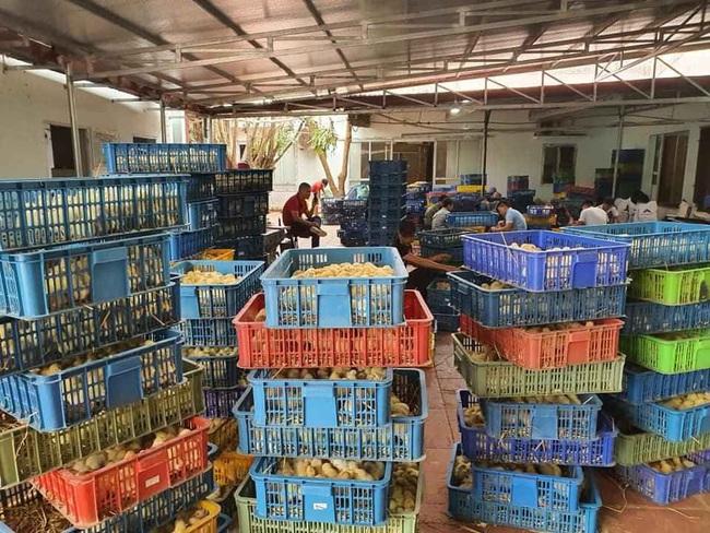 Giá gia cầm hôm nay 29/6: Giá gà thịt công nghiệp giảm, vịt về chợ ít dần - Ảnh 3.