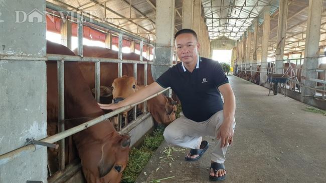 Thái Bình: Đại gia bất động sản bỏ phố về quê ....trồng cỏ, nuôi bò - Ảnh 1.