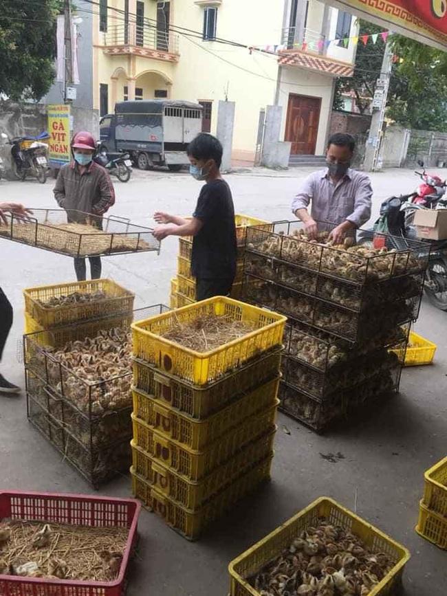 Giá gia cầm hôm nay 30/6: Giá gà thịt công nghiệp có nơi xuống dưới 30.000 đồng/kg - Ảnh 3.
