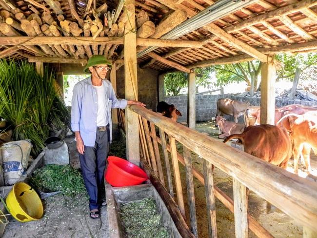 Lão nông trồng rừng kết hợp nuôi bò, lợn... mỗi năm cho thu nhập 1 tỷ đồng   - Ảnh 3.