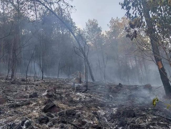 Nghệ An: Trắng đêm khống chế cháy rừng, thiệt hại 4ha    - Ảnh 5.