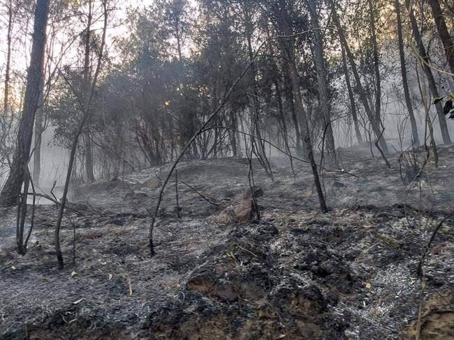 Nghệ An: Trắng đêm khống chế cháy rừng, thiệt hại 4ha    - Ảnh 6.