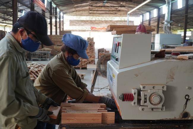 """(Báo giấy) Đủ """"đất"""" để xuất khẩu gỗ đạt 11 tỷ USD - Ảnh 1."""