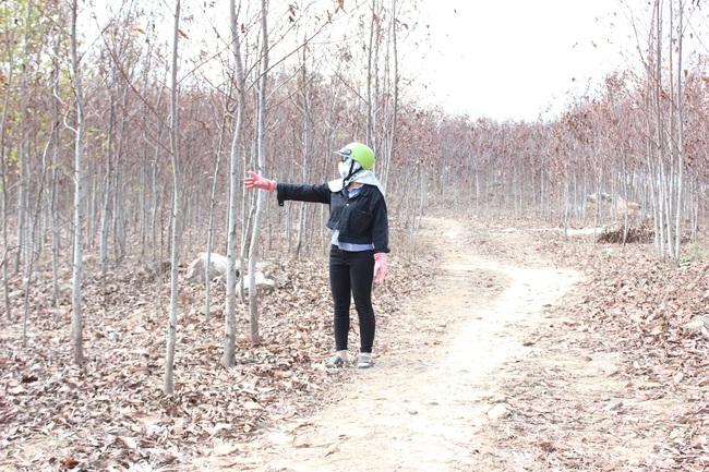 Hàng ngàn cây keo lai chết khô vì nắng hạn - Ảnh 1.