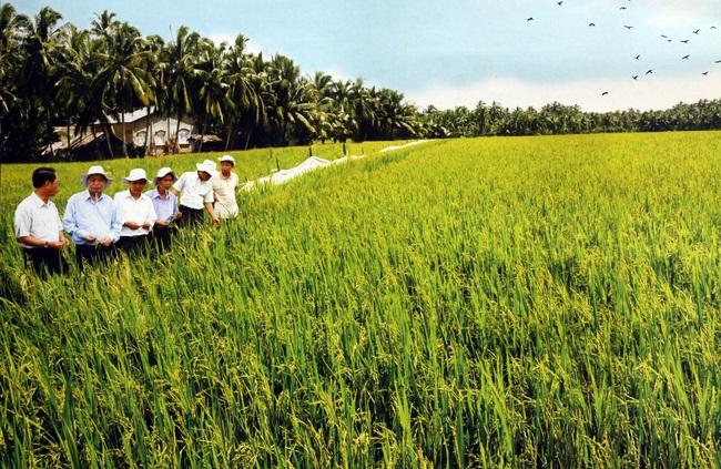 Ông Nguyễn Như Cường: Trồng lúa muốn khấm khá phải có 5ha, còn 10ha thì có thể làm giàu - Ảnh 2.