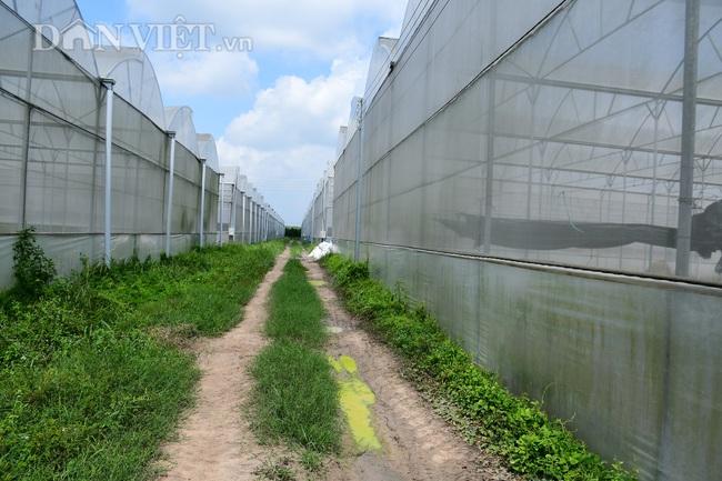 """Bình Dương: Có toan tính """"xóa sổ"""" dự án nông nghiệp để phân lô bán nền ? - Ảnh 2."""