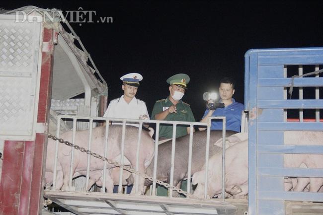Thức cả đêm thông quan 970 con lợn nhập từ Thái Lan về cửa khẩu Lao Bảo - Ảnh 4.