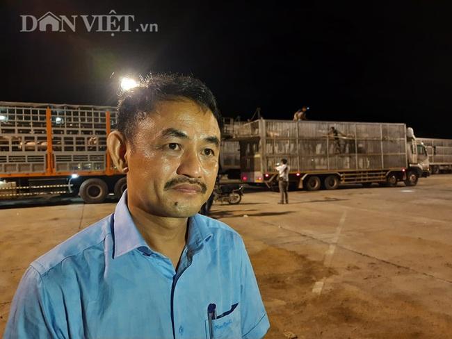 Thức cả đêm thông quan 970 con lợn nhập từ Thái Lan về cửa khẩu Lao Bảo - Ảnh 10.