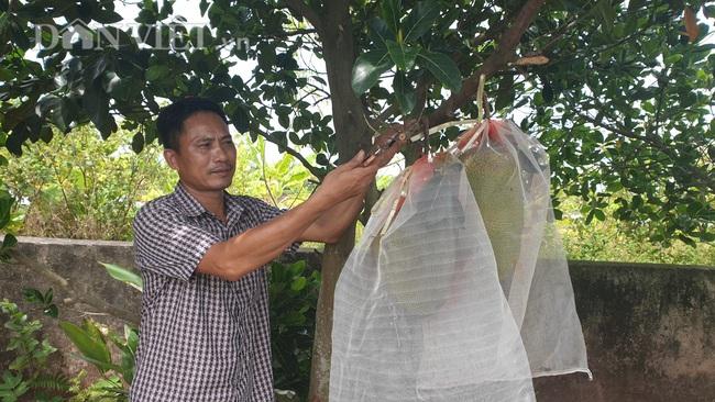 Thái Bình: Bắt mít ra quả quanh năm, lão nông đút túi gần nửa tỷ - Ảnh 2.