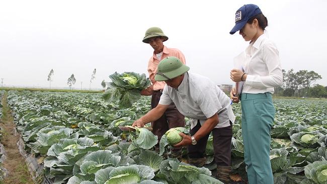 Cán bộ hội tiên phong sản xuất nông nghiệp sạch - Ảnh 1.